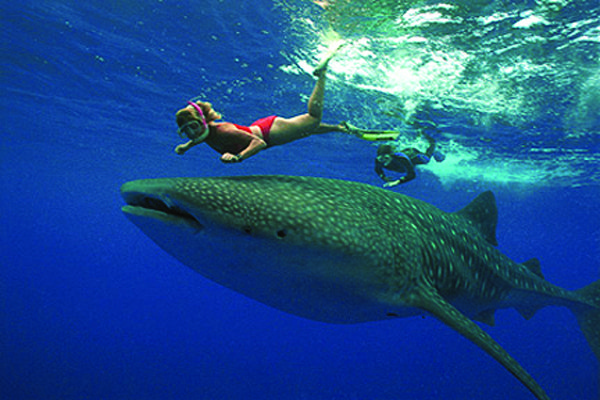 mexico girl and shark