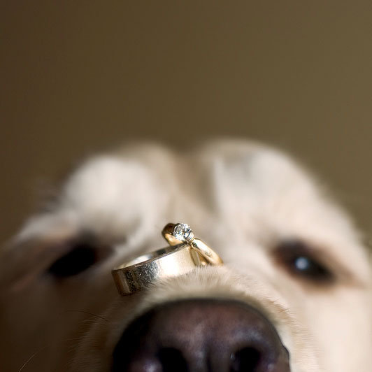 photo of the day bridalguide With dog wedding ring