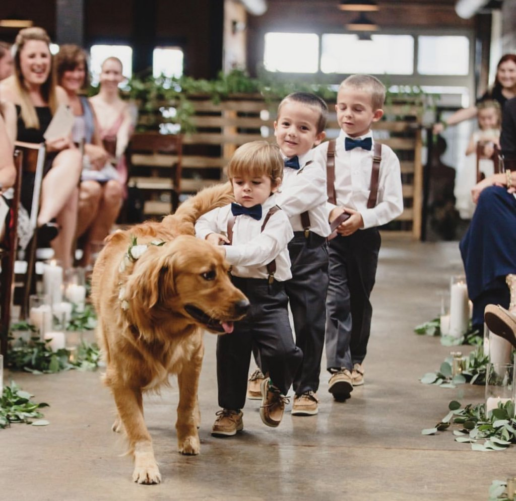 ring bearer and ring dog