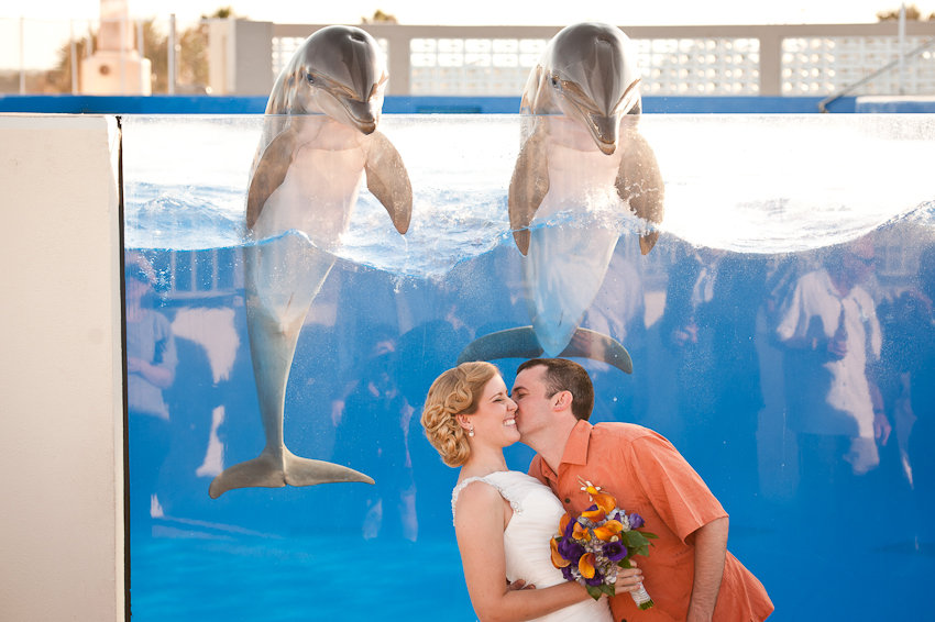 dolphin wedding photo