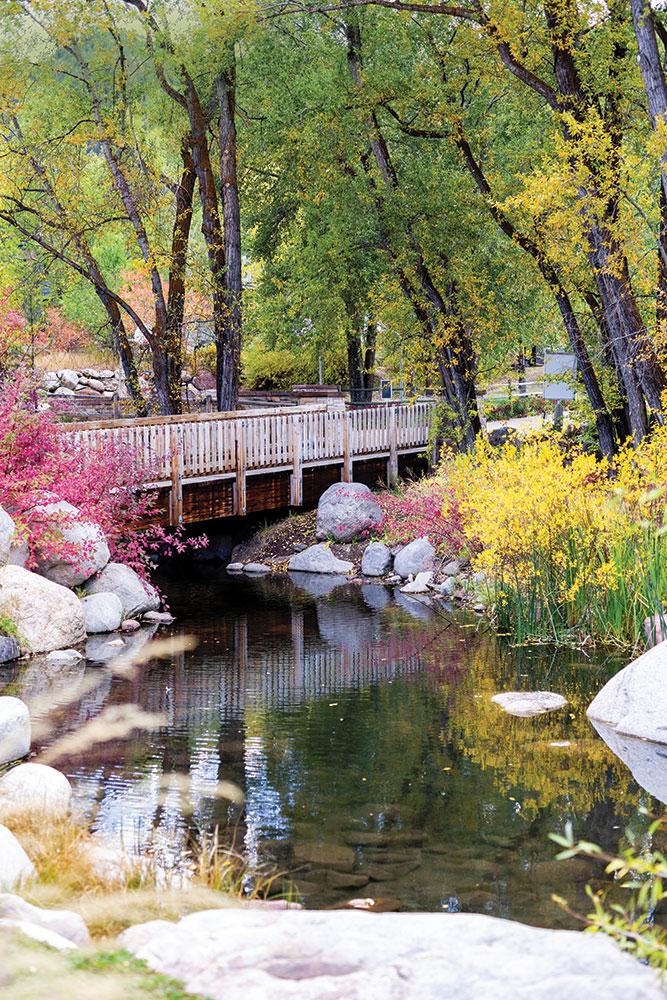 Garden in Aspen Colorado