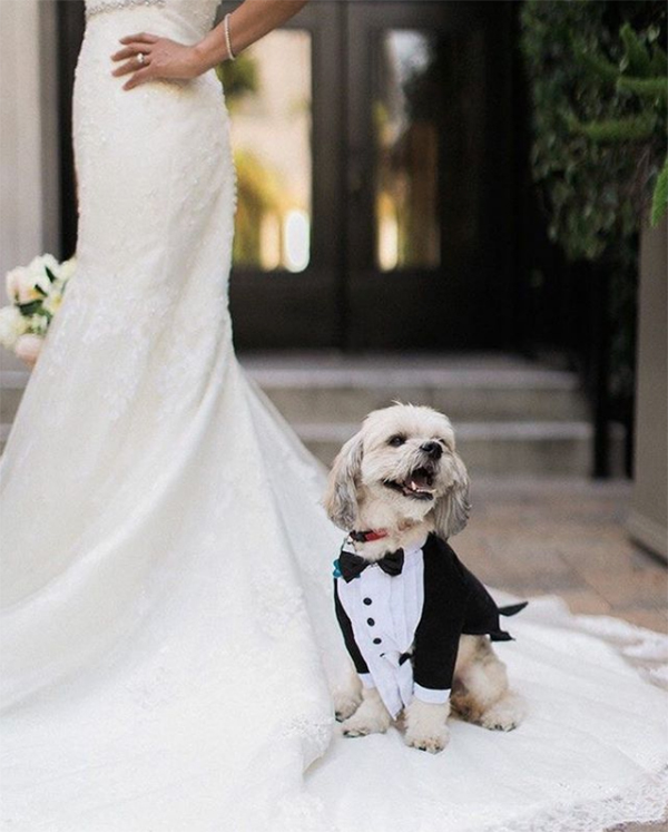 25+ Instagram-Worthy Ways to Include Your Dog in the Wedding BridalGuide