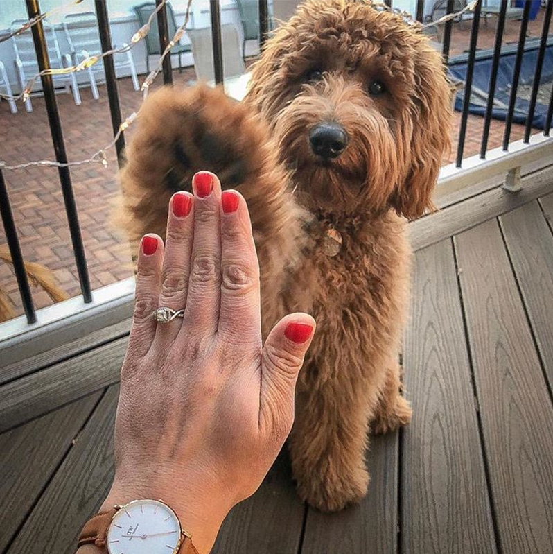 puppy high five ring selfie
