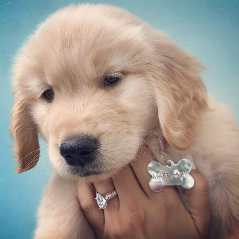 Proposal Ideas Using Pets: 25+ Instagram-Worthy Ways To Include Your Dog In The