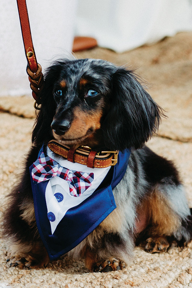 summer wedding dog ring bearer