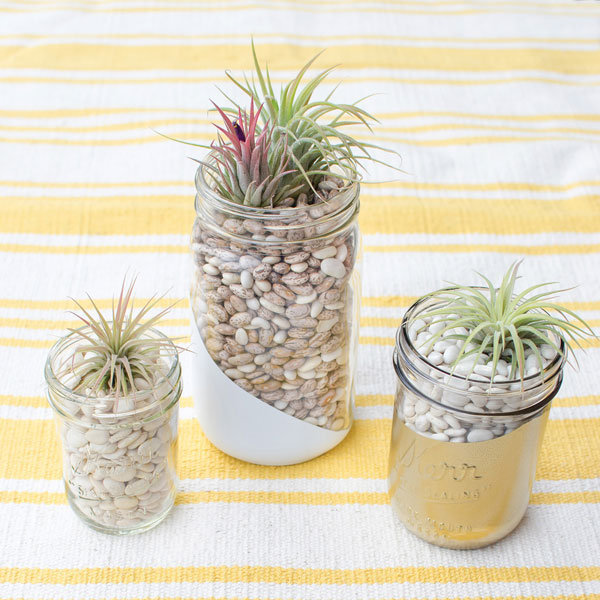 mason jar plant favors