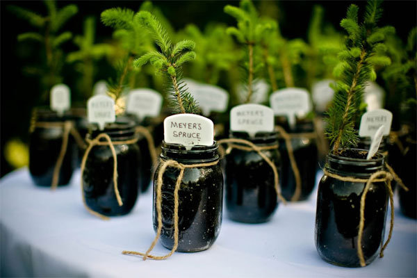tree wedding favor