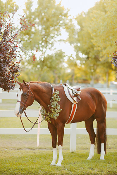 Finding the Perfect Horse Name  Read Horse Names gtgt We have complied the largest horse name list on the web You will find many great namely titles for your irish indian miniature quarter or race horse all in one place