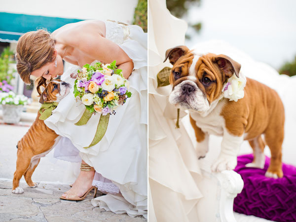 dog in wedding