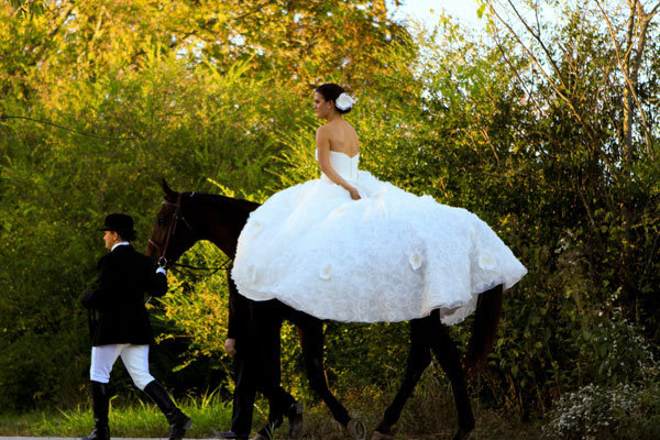 horse in wedding