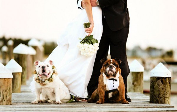 What to Consider Before Including Your Pet in the Wedding ...