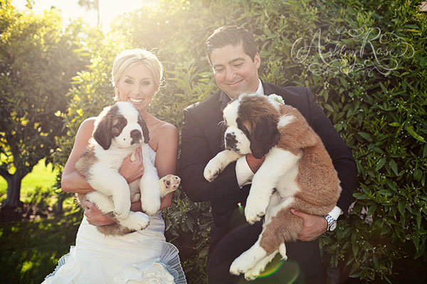 pet pointers how to include your dog bridalguide