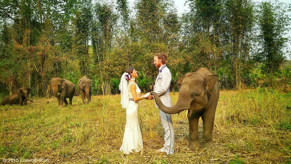 elephants center in thailand