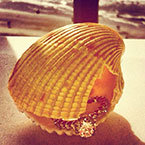 seashell with engagement ring