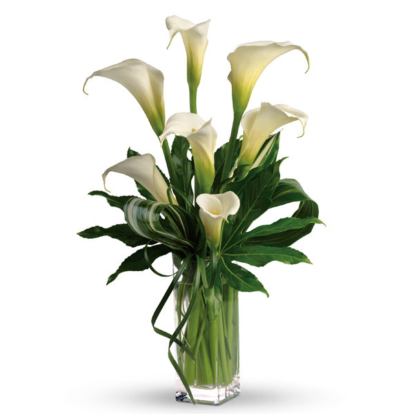 Calla Assorted