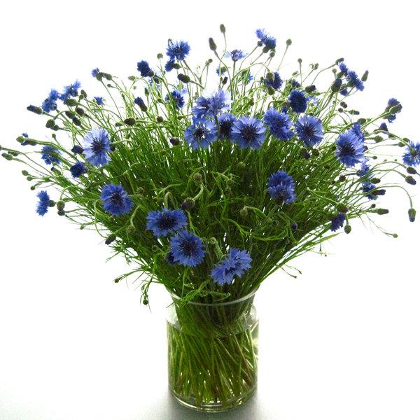 September Wedding Flowers In Season: Flowers In Season: June