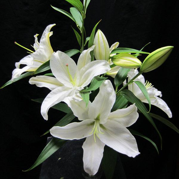 Wedding Flowers In February: Flowers In Season: February