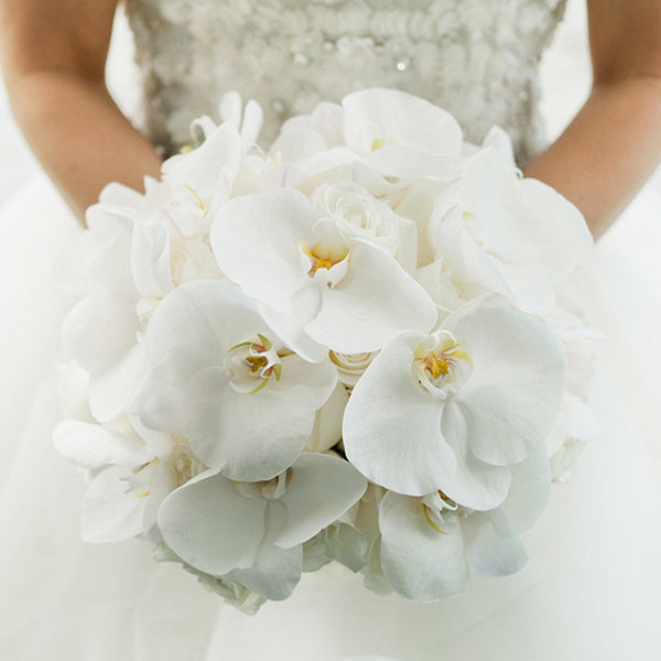 Flower Guide Orchids Bridalguide