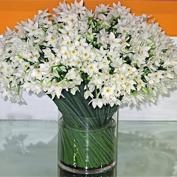 Wedding Flowers In February: Flowers In Season: December