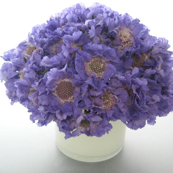 Wedding Flowers In February: Flowers In Season: March