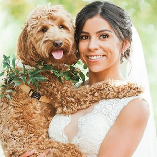 maggie sottero dog in wedding