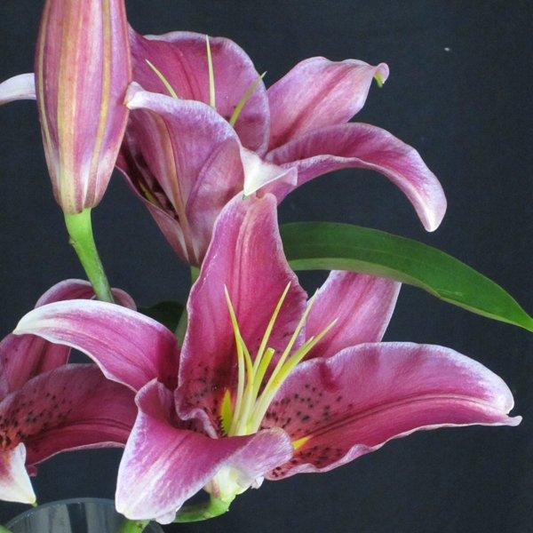Wedding Flowers In Season In March : Flowers in season march bridalguide