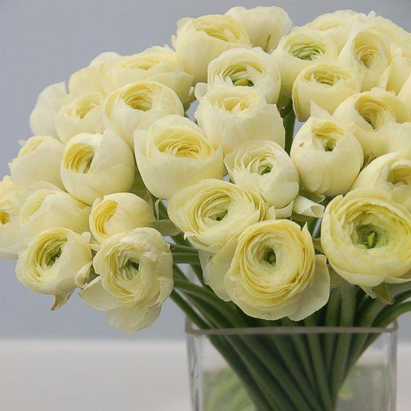 Flowers in season december bridalguide for Flowers in season in february