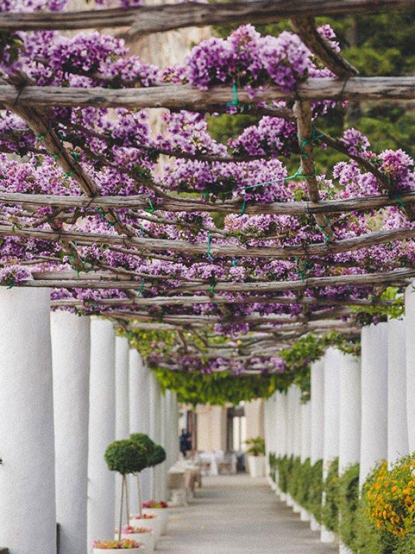 Amalfi Coast Flowers
