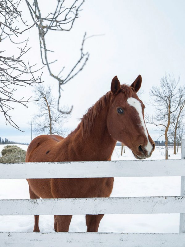 Winter Wonderland: Kari & Billy In Roseau, MN
