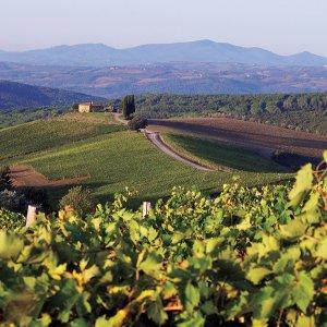 Tuscan Rosewood Castiglion Del Bosco