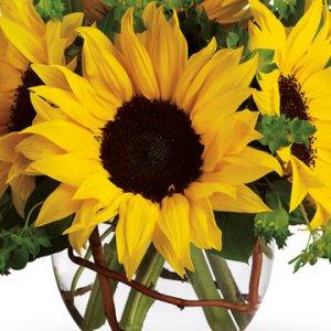 Flowers in Season: August