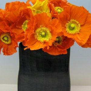 Flowers in season november bridalguide for Flowers in season in february