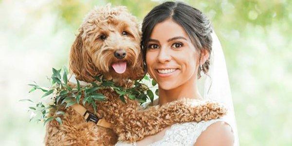 maggie sottero dog in wedding
